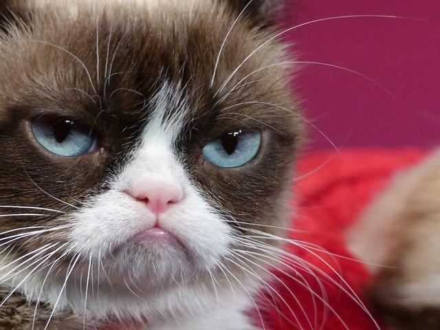 Im Alter von sieben Jahren: Internet-Star Grumpy Cat ist tot