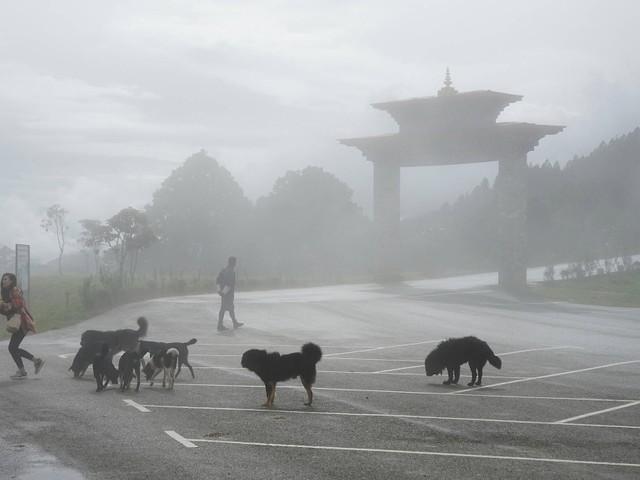 Runterkommen in Bhutan: Ein schleierhaftes Land