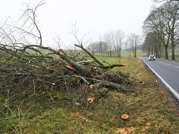 Straßen NRW: Landesbehörde verteidigt Baumfällungen in Oberberg