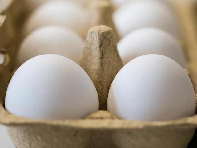 Bei Penny, Aldi Nord und Rewe verkauft - Firma Eifrisch ruft Eier wegen Salmonellenverdachts zurück