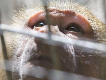 Nach brutaler Tierquälerei: Behörden überprüfen Labor
