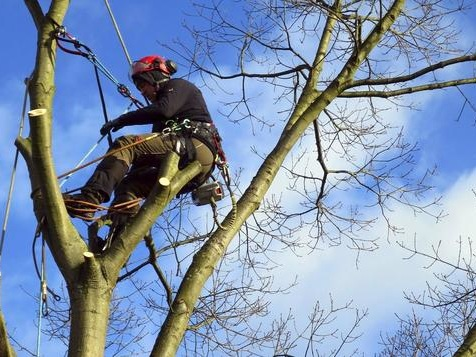 Ein Mann verlängert Bäumen das Leben