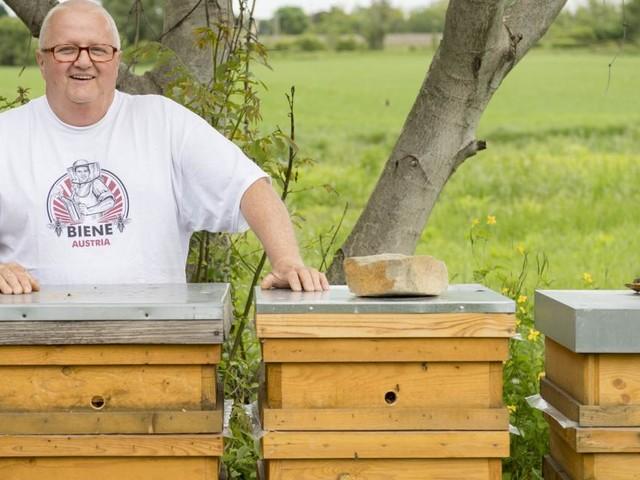 Warum die Bienen eines Wiener Imkers weltweit gefragt sind