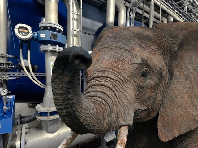 Elefant muss Handwerkerausbildung abbrechen, weil er immer Bleistifte hinter den Ohren verliert