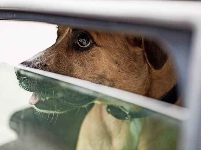 Polizisten retten Hund in Schleswig-Holstein aus aufgeheiztem Auto
