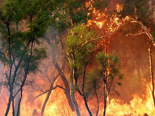 Australischer Feuerwehrmann löst aus VersehenBuschfeuer aus