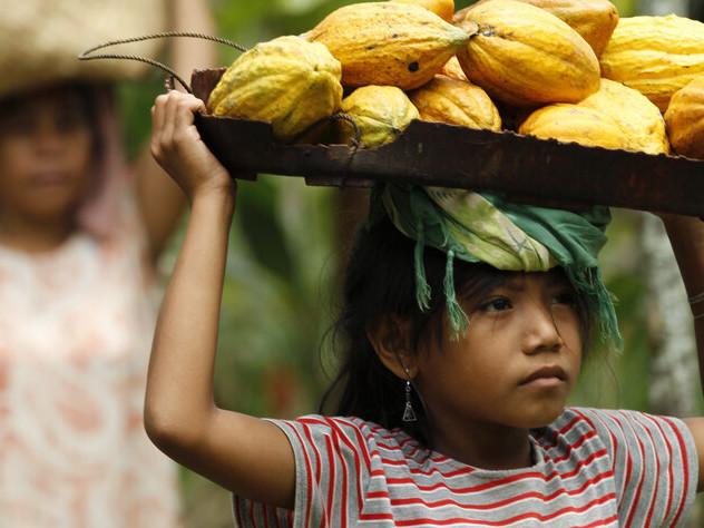 Studie über Kakaoproduktion: Kinderarbeit für Schokolade
