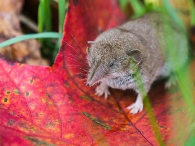 Achtung: Das sind die 11 giftigsten Tiere Deutschlands