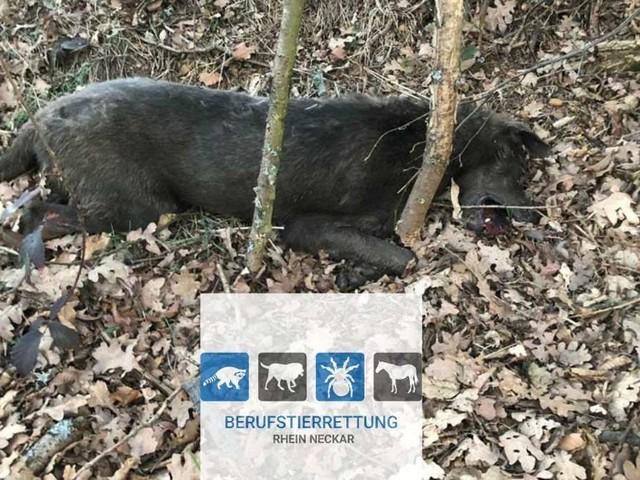 Vier tote Hunde in Wald gefunden – diese Gemeinsamkeit haben sie alle