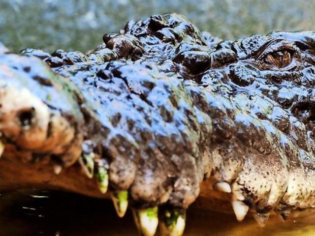 Krokodil-Alarm bei Stuttgart – Stadt sperrt See für Badegäste