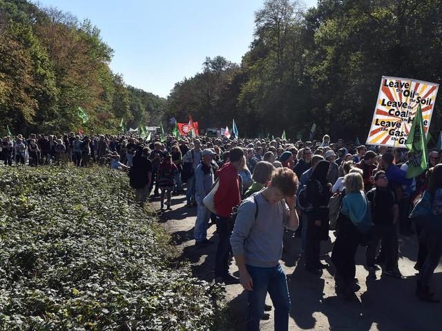 Eilverfahren: OVG Münster stoppt Rodung im Hambacher Forst
