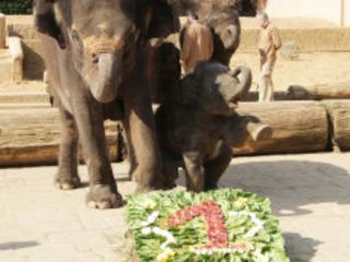 """Erlebnis-Zoo Hannover feiert """"Happy Bearsday"""": Eisbär """"Sprinter"""" bekommt eiskaltes Geschenk zum 10. Geburtstag"""