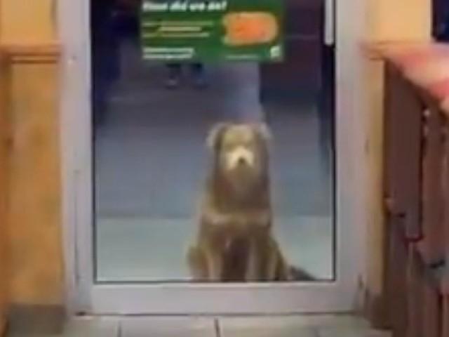 Wartet geduldig vor Filiale - Straßenhund schaut jeden Abend bei Subway für eine Mahlzeit vorbei