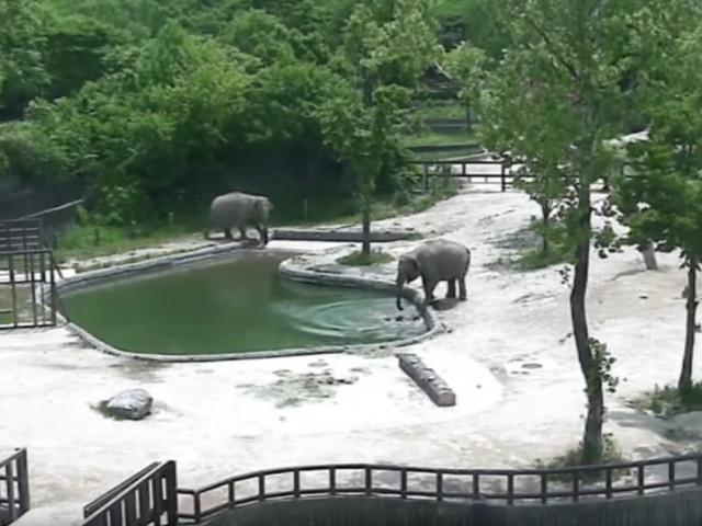 Rettungsaktion im Elefantenbad