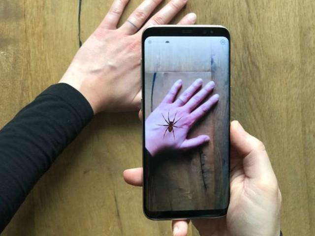 Arachnophobie: Studie: Spinnenangst kann mit dem Handy bekämpft werden
