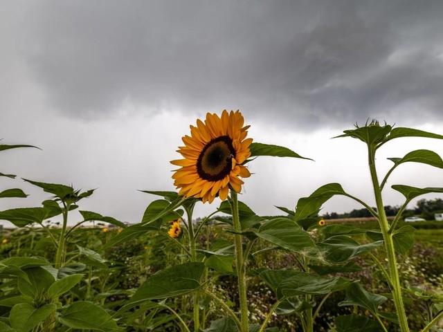 Gewitter und starker Regen: Tief Dirk sorgt für wechselhaftes Wetter in Deutschland