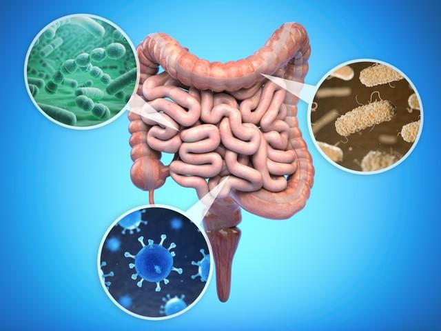 Darmbakterien beeinflussen laut Studie den Alterungsprozess