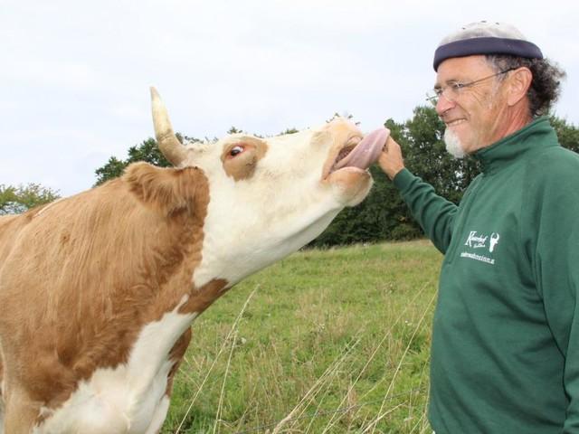 Wie ein Rinderbauer zum Rinderretter wurde
