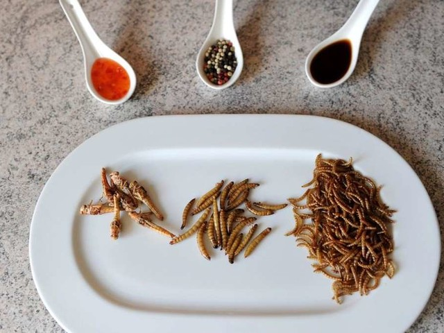 Insekten essen: eklig oder genial? - Experten klären über die größten Mythen auf