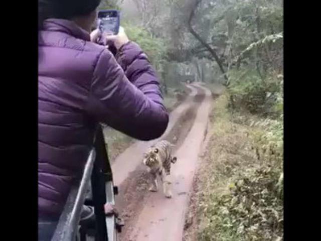 Tourist macht riskantes Videoin indischem Nationalpark- dann gibt Tour-Guide plötzlich Vollgas