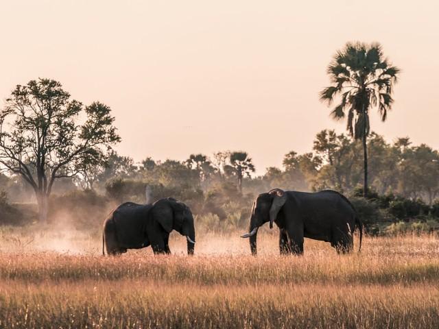 Chobe-Nationalpark & Okavango Delta: unsere Botswana Safari Highlights