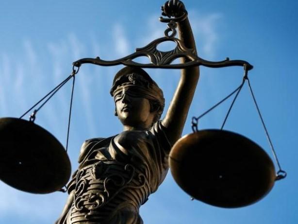 Prozesse: Nachbarschaftsstreit um Kiefer: BGH vor kniffligen Fragen