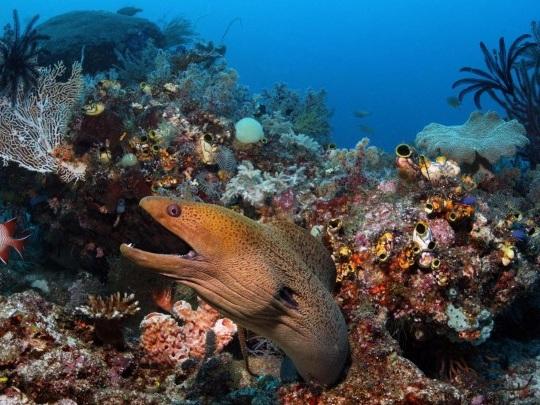 """Australien - Great Barrier Reef vorerst kein """"gefährdetes"""" Welterbe"""
