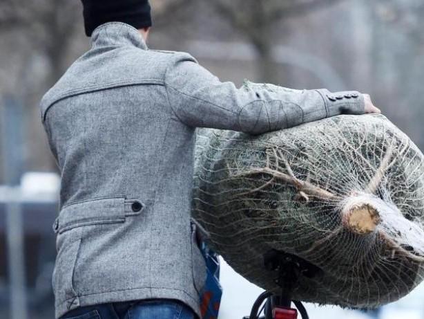 Vor den Feiertagen: So transportieren Radler sicher einen Weihnachtsbaum