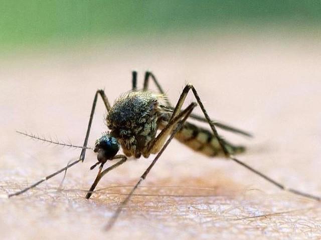 Stiftung Warentest - Welche Mittel wirklich gegen Mücken und Zecken helfen