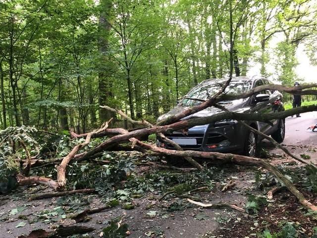 Autofahrerin entging im letzten Moment Aufprall von herabstürzendem Baum auf Wagen
