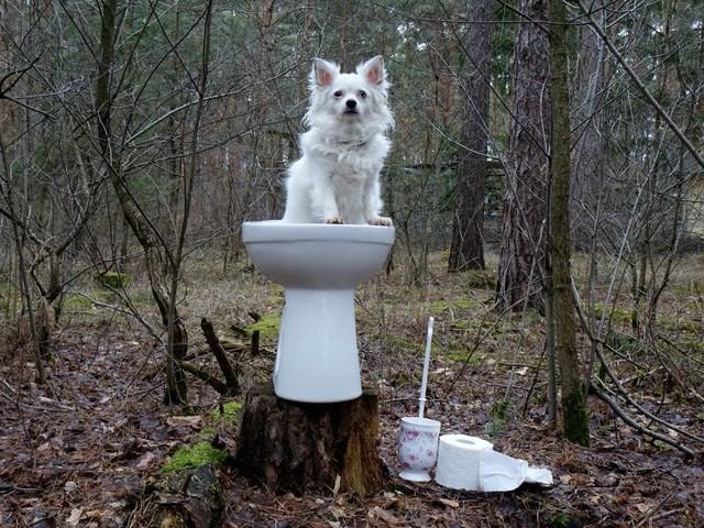 Zeit, den Kot zu teilen: Smarte Toiletten sind auf dem Vormarsch
