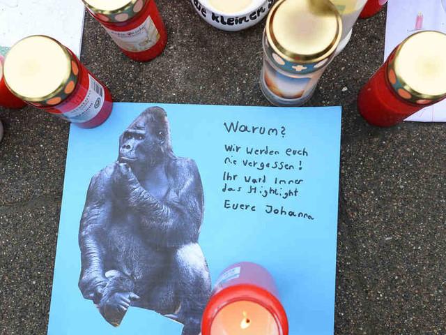 Mehr als 30 Tiere gestorben: Gedenkveranstaltung nach Brand in Krefelder Affenhaus