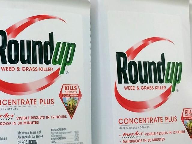 Glyphosat-Prozess - Bayer-Aktie im freien Fall: Was dem Pharmakonzern im schlimmsten Fall droht