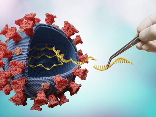 Universeller Impfstoff gegen Coronaviren soll in Zukunft vor Pandemien schützen