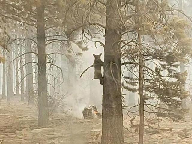 USA: Paar nach Waldbrand wegen fahrlässiger Tötung angeklagt