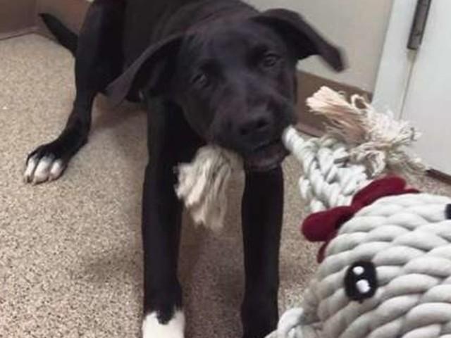 Trotz Warnung: Paar adoptiert verstörten Hund und ist überrascht, was passiert