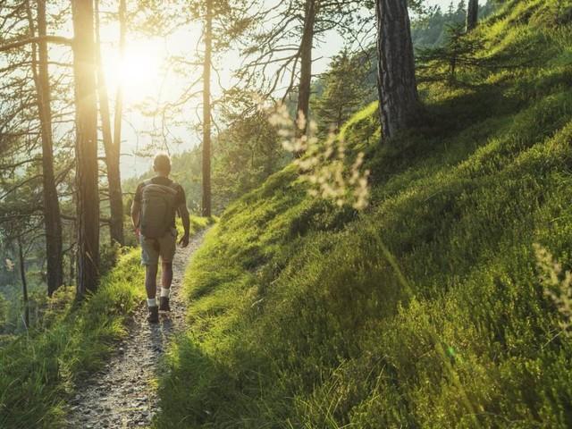 Brocken oder Nichtbrocken: Der Wald-Knigge für den Sommer