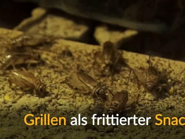 Video: Im Angebot: Gegrillte Grillen und Insekten-Mehl