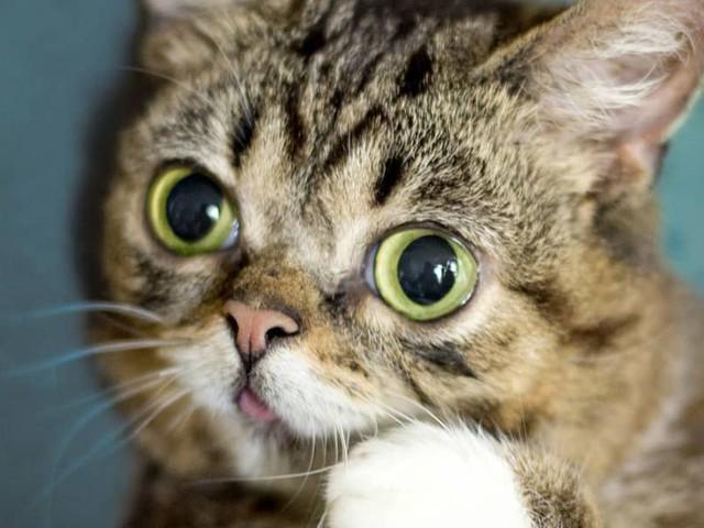 Berühmtes Kätzchen: Lil Bubs (†) Asche soll ins All kommen