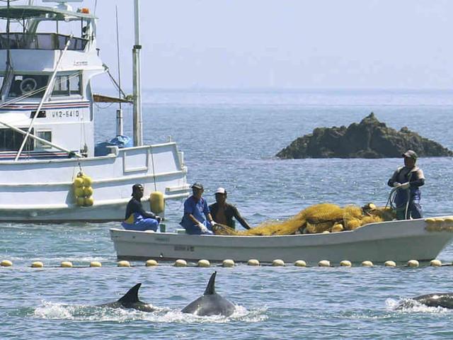 """""""Unmenschliches Abschlachten"""": Japan macht wieder Jagd auf Delfine"""