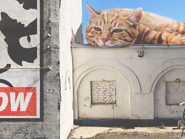 'Cats And The City' – Die gigantischen Kätzchen von Andrey Scherbak