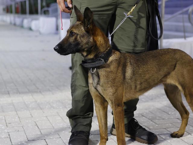 Forschungsprojekt bei Konzerten: Können Hunde Corona erschnüffeln?