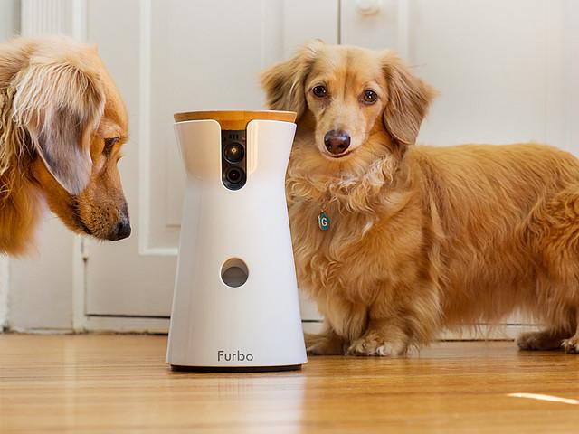PetTech: FurboKamera überwacht deinen Hund und verteit Leckerli #VIDEO