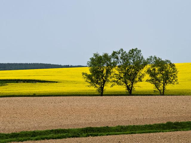 Spektakel am Zugfenster: Goldgelbe Frühlingslandschaft in Südböhmen