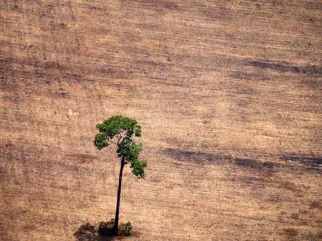 Riesige Rauchwolken über São Paulo: Verheerende Brände im Amazonas-Regenwald – Forscher schlagen Alarm