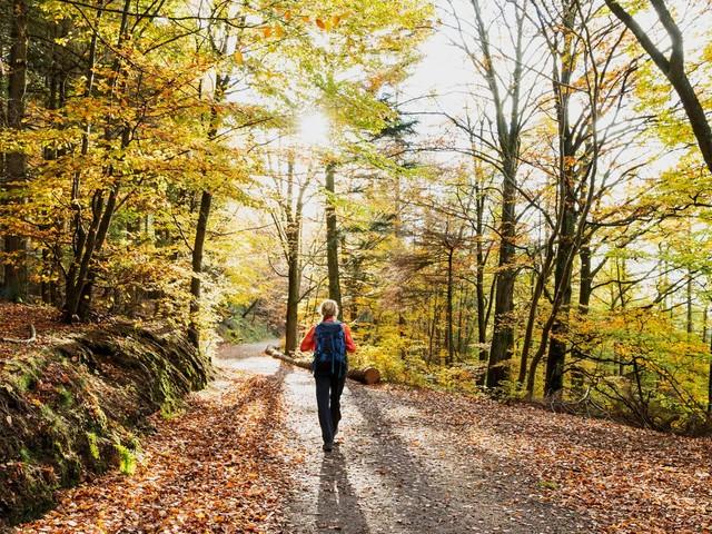 Zwischen Alpen und Meer: Natur erleben: Das sind die schönsten Wanderungen im Herbst