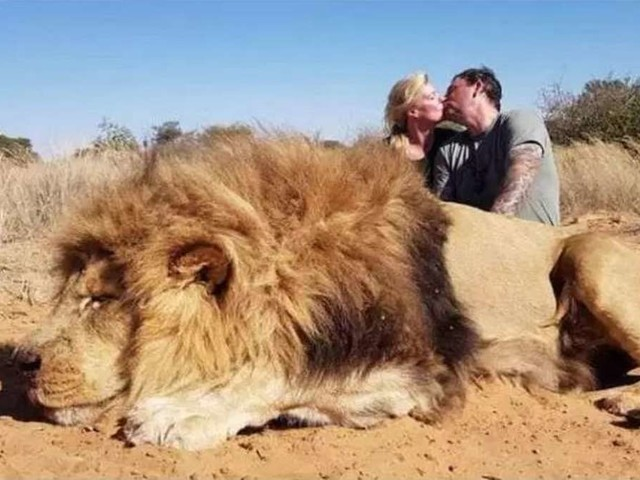 """Jäger posiert mit erschossenem Löwen - jetzt rechnet seine Tochter mit ihm ab:""""Angewidert!"""""""