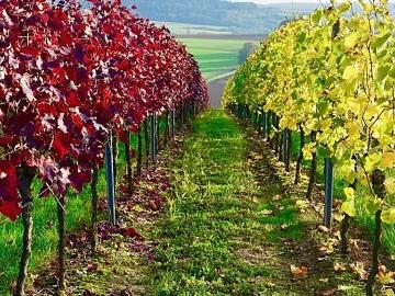 Rotwein und Weißwein?
