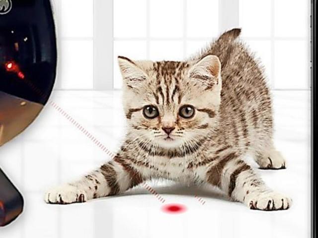 Die besten Gadgets für Tiere