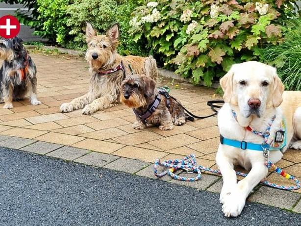 "Hundeschulen: Arnsberg: ""Welpenflut"" sorgt für Hochbetrieb"